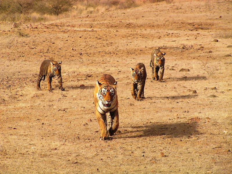 Viaggio in Rajasthan 10 cose da fare