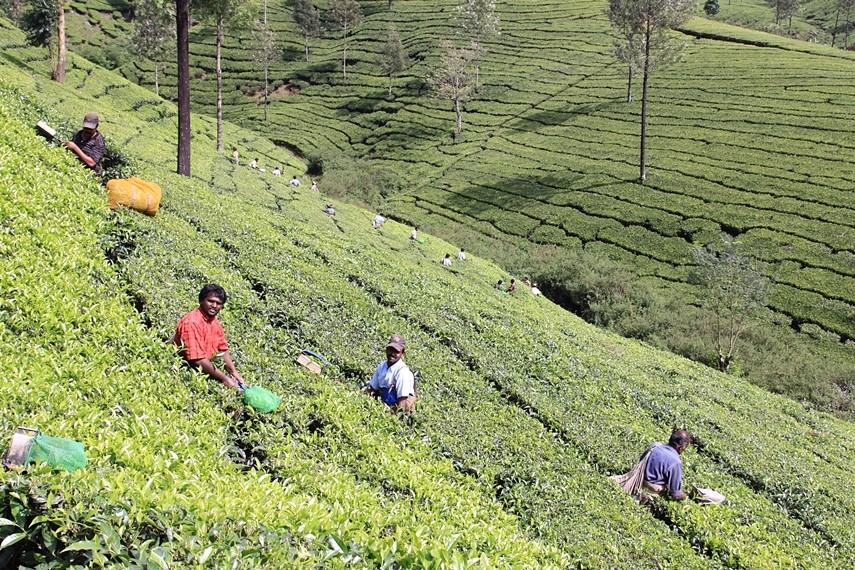 Munnar e le piantagioni di tè