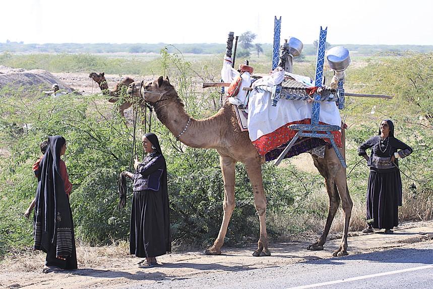 Rabari comunità nomade
