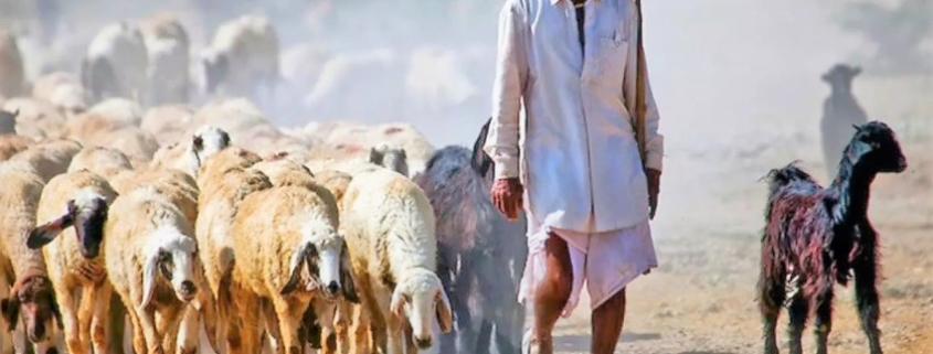 Bishnoi la comunità ambientalista del Rajasthan