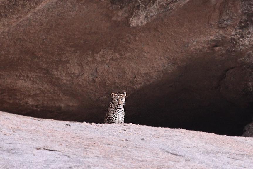 India leopardo di Bera